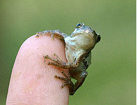 Microfrog