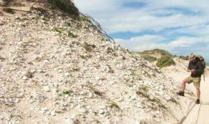Giant shell midden Walker Bay