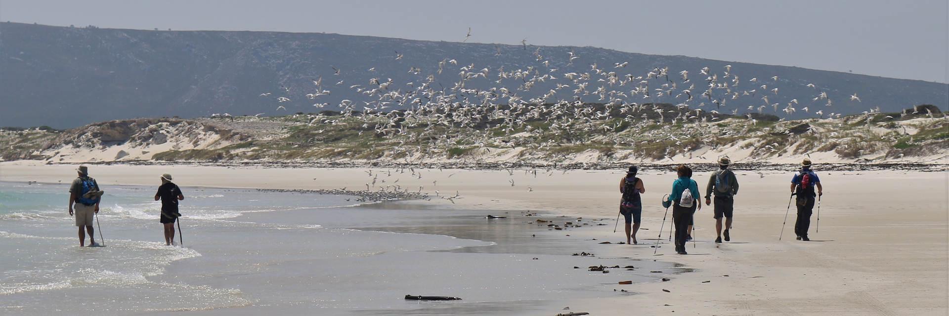 A 2 Beach Gulls 1920x640