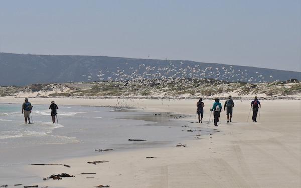 A 2 Beach Gulls 600x375